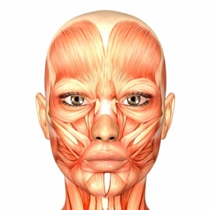 Female-Face-Anatomy-Muscles